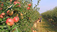 Pomoc w gospodarstwie: nowe zasady rozliczania