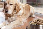 UOKiK: niedozwolone porozumienie Royal Canin Polska