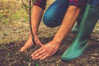 Wycinka i sadzenie drzew przy prowadzonej inwestycji budowlanej