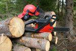 Wycinka drzewa w koszty uzyskania przychodu firmy?