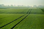 Kupno ziemi rolnej w 2016 roku wg nowych zasad