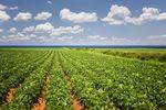 Ceny ziemi rolnej: indeks 2014 r.