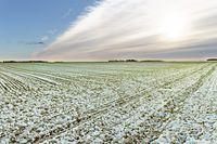 Ceny ziemi rolnej: indeks III kw. 2013 r.