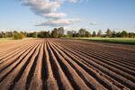 Ceny ziemi rolnej: indeks IV kw. 2015 r.