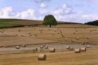 Ceny ziemi rolnej rosną 18% rocznie