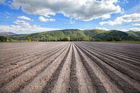 Ceny ziemi rolnej w I kw. 2015 r.