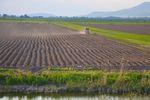 Polskie ceny ziemi rolnej w pogoni za Europą