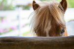 Hotel dla koni rozliczany jak umowa najmu?