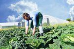 Rolnik prowadzący działalność gospodarczą: granica podatku 2016