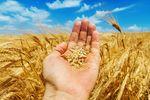 Jakie ubezpieczenie dla rolników?