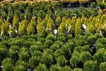 Prowadzenie szkółki leśnej a podatek dochodowy