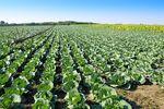 Podatek dochodowy gdy dzierżawa gospodarstwa rolnego?
