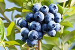 Polski eksport warzyw i owoców rośnie w siłę