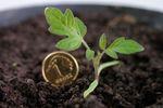 W co zainwestować, gdy lokaty bankowe i obligacje nie zarabiają?