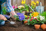 Czas na prace w ogrodzie: co kupujemy?