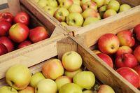 Przetwórnie i skupy owoców pod lupą UOKiK