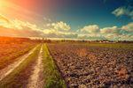 Opłata za odrolnienie gruntu w koszty uzyskania przychodu