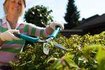 Narzędzia ogrodnicze: preferencje konsumentów