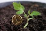 Inwestycja w ziemię jako lokata oszczędnościowa