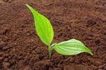 Warto rozważyć inwestycje w ziemię