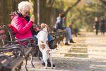 Zwolnienie emeryta z podatku od psa