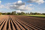 Zakup ziemi rolnej z podatkiem od czynności cywilnoprawnych
