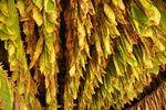 Podatek akcyzowy na importowane wyroby tytoniowe