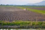 Sprzedaż ziemi rolnej z podatkiem dochodowym?