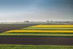 Dzierżawa gruntów rolnych z podatkiem dochodowym