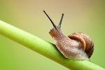 Podatek PIT: hodowla ślimaków to działalność rolnicza?