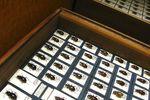 Prywatna kolekcja owadów: sprzedaż bez podatku dochodowego