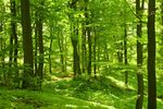 Podatek leśny i od nieruchomości do 16 sierpnia
