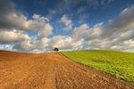 Podatek od nieruchomości gdy grunty rolne bądź leśne