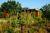 Sprzedaż rodzinnego ogrodu działkowego bez PIT