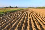 Podział działki rolnej. Jakie zasady?