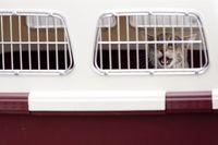 Pies na pokładzie. 10 zasad transportu zwierząt samolotem