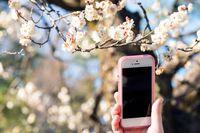 Wiosenny remarketing: SMS odświeży relacje z klientem