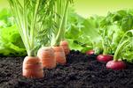 """Dlaczego warto """"przerzucić się"""" na rolnictwo ekologiczne?"""