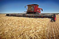 Działalność rolnicza: rezygnacja ze zwolnienia i korekta VAT