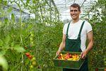 Rolnik zatrudniający pracownika: składki ZUS