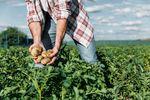 Ceny produktów rolnych V 2018