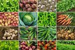 Ceny produktów rolnych V 2019
