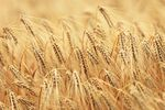 Ceny produktów rolnych VI 2014