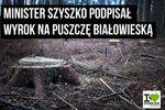 Jak Puszcza Białowieska i minister Szyszko podzielili social media