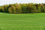Sprzedaż ziemi rolnej z lasem w podatku dochodowym