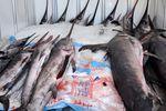 Przewóz żywności a umowa ATP [© celeste clochard - Fotolia.com]