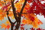 Jesienno-zimowe obowiązki zarządcy nieruchomości