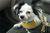 Czy ubezpieczenie psa ma sens?