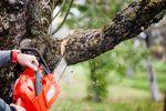 Wycinka drzew: mniej formalności i mniejsze kary