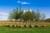 Sadzenie drzew na cudzych działkach w koszty uzyskania przychodu